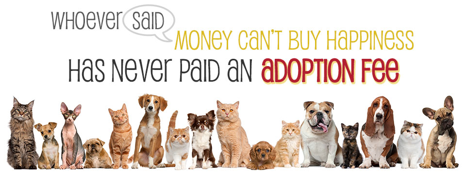 adoption-fee-banner